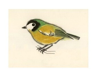 "Bird Art bird print -  James - 6"" X 4"" print - 4 for 3 SALE"