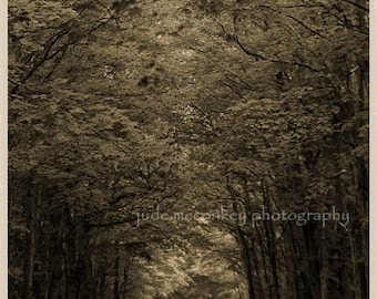 Woods photograph, tunnel of trees print, home decor, Fine Art Photograph