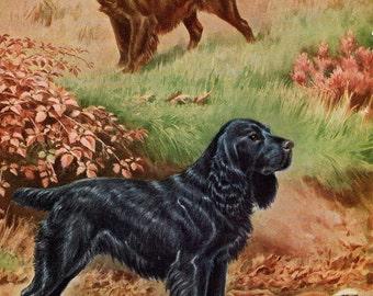 Vintage Dog Illustration Field Spaniel Walter Weber
