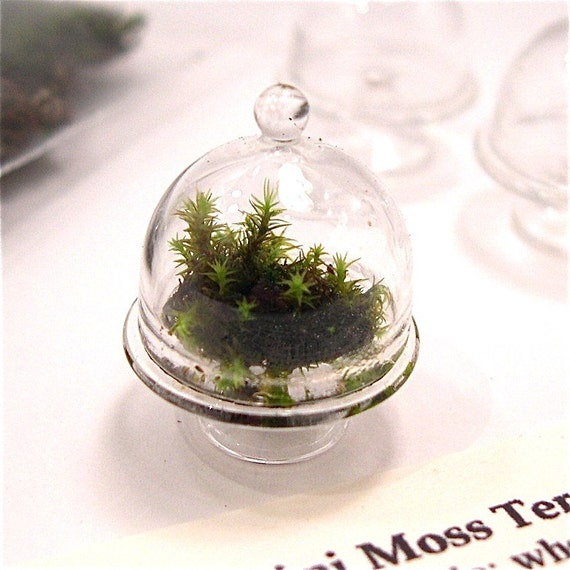 miniature moss garden dome terrarium kit with glass cloche. Black Bedroom Furniture Sets. Home Design Ideas