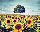 Sunflower field print, Yellow and green decor, Landscape, Sunflower Photography, Floral print, flowers and trees, summer