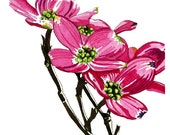 Multiple Blooms - 3 of 3 Dogwood Watercolor Print Series