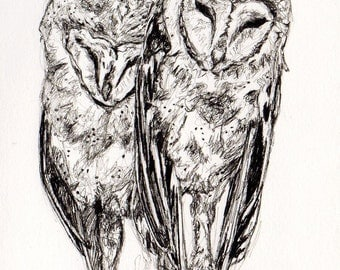 Barn Owls in Love - Soul Mates in the Barn Rafters - Ink Drawing by Jen Tracy