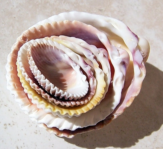 Sea Shells, Nested Shells, Set of 6 Shells
