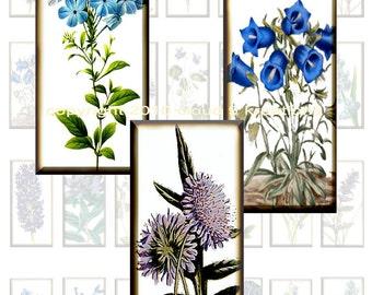 Blue Flowers...Botanicals...1x2 Inch...Dominos...Digital Collage Sheet