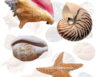 Seashells Digital Collage Sheet