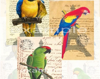 McCaws And Parrots on French Text...Digital Collage Sheet