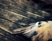 Bird wing feathers art photography - On Silent Wings - death in nature bird art photography - dead bird in soft grey, blue, tan