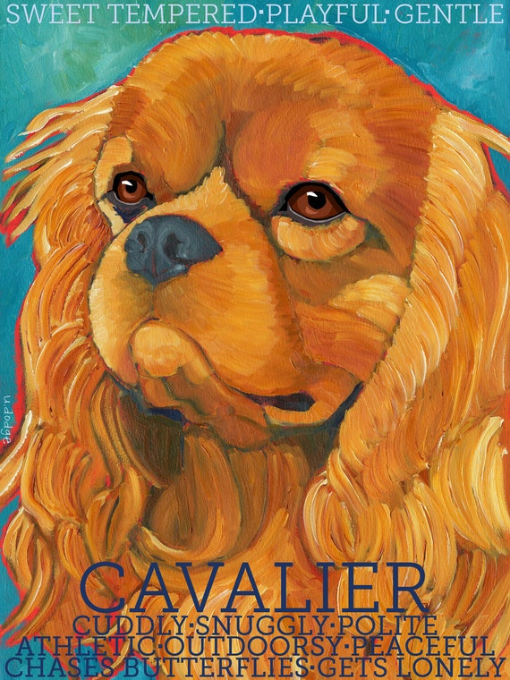 Cavalier King Charles No. 3 - magnets, coasters and art prints ruby