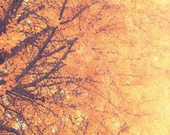 ginkgo tree print, autumn decor, tree photograph, nature photography, winter landscape photo, orange nursery decor, ginkgo biloba art