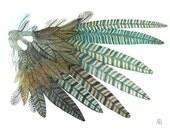 pheasant wing bird art large original watercolor painting