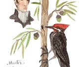 Alexander Wilson Willow Oak and Woodpecker, original watercolor painting, portrait, pileated woodpecker, bird art, naturalist