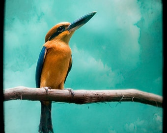 Guam Kingfisher - Dreamy Color Exotic Bird Fine Art Print, Nature, Animal Signed Photograph, Square Format