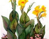 Mississippi Summer Cannas, 15 X 22, Original Watercolor framed, FREE shipping