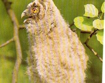 Bird postcard, Owl Postcard
