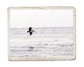 Flight Fine Art Nature Photograph Pelican Sea Bird Ocean Flying Water Shore Nautical Animal Print