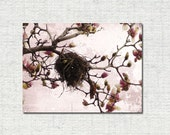 Cottage Chic Bird Nest Photograph Pink Magnolia Flowering Branches Nature Decor Photo