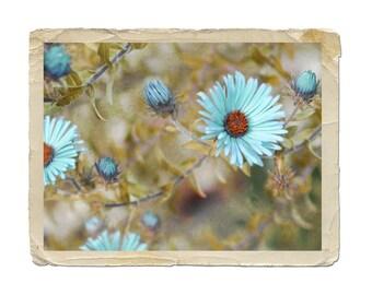 Flower Photograph Blue Asters Floral Nature Fairy Blue Aqua Daisy Vintage Style Fine Art