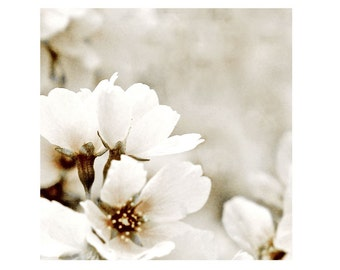 White Flower Fine Art Photograph Mantle Of White Floral Romance Cherry Tree Nature Garden