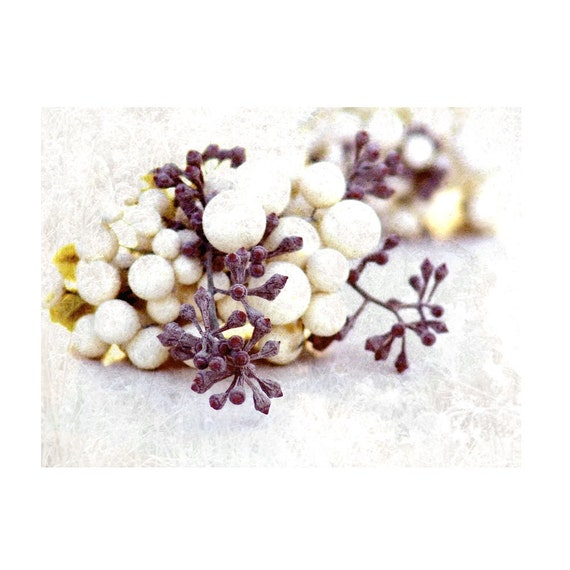 Snowberries and Sugar Plum Photograph Fine Art Still Life -Berries Snow Purple Ivory Nature
