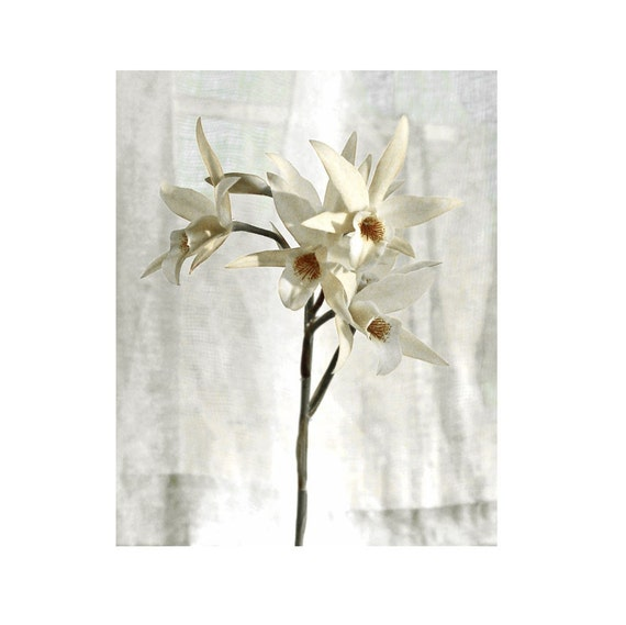 White Flower Photograph Orchid And Ivory Floral Fine Art Blossoms Romance Vintage Style