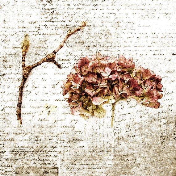 Vintage Style Pink Botanicals Print Hydrangea Flower Sepia Nature Decor Photo Magnolia