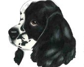 Art Print Parti Cocker Spaniel Black and White Helps Local Animal Shelter