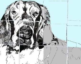 Dog Art - Dog Drawing- English Setter - Dog Art Print