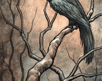 Signed and matted print of original Black Bird IV watercolour painting by Eden Bachelder, ready to frame. Raven, crow, corvid.