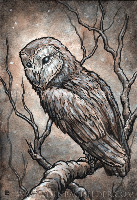 Barn Owl in Snow, matted original ink and watercolour painting by Eden Bachelder