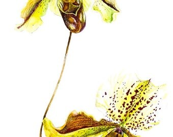 Watercolor Painting, Orchid Painting, Watercolor Original Painting, Lady Slipper Orchids