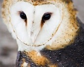 Barn Owl Face Fine Art Print