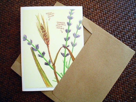 Note Cards, Gift for Gardener, Nature Cards, Lavender, Boxed Set, Greeting Cards, Gift for Her, Pretty Cards, Boxed Cards With Botanical Art