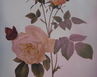 Color Print of the Tea Scented China Rose with Butterflies