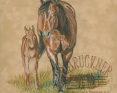 Taylor's New Filly, Colored Pencil by B.Bruckner