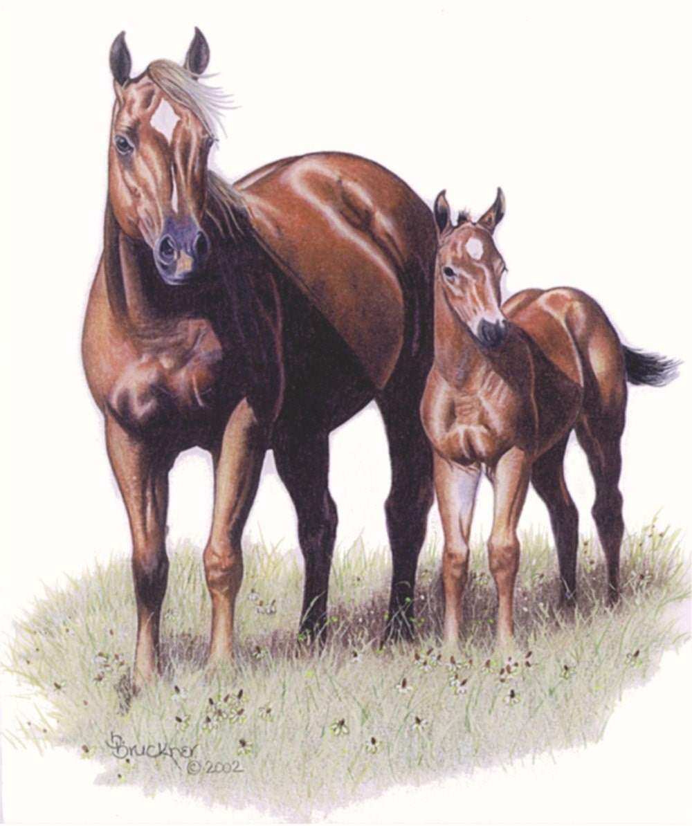 Quarter Horse Mare and Foal Portrait by B.Bruckner