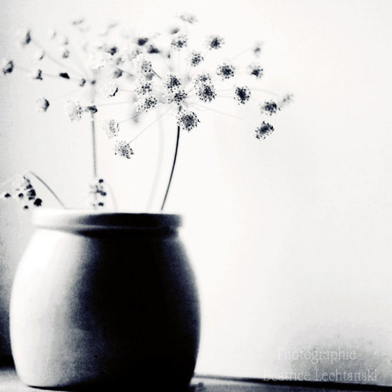 """Black and white photography. """"Umbels..."""". Fine art photography print. 8x8 (20x 20cm)"""