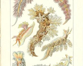 1912 Animal Print - Sea Slugs - Vintage Antique Home Decor Book Plate Art Illustration for Framing 100 Years Old