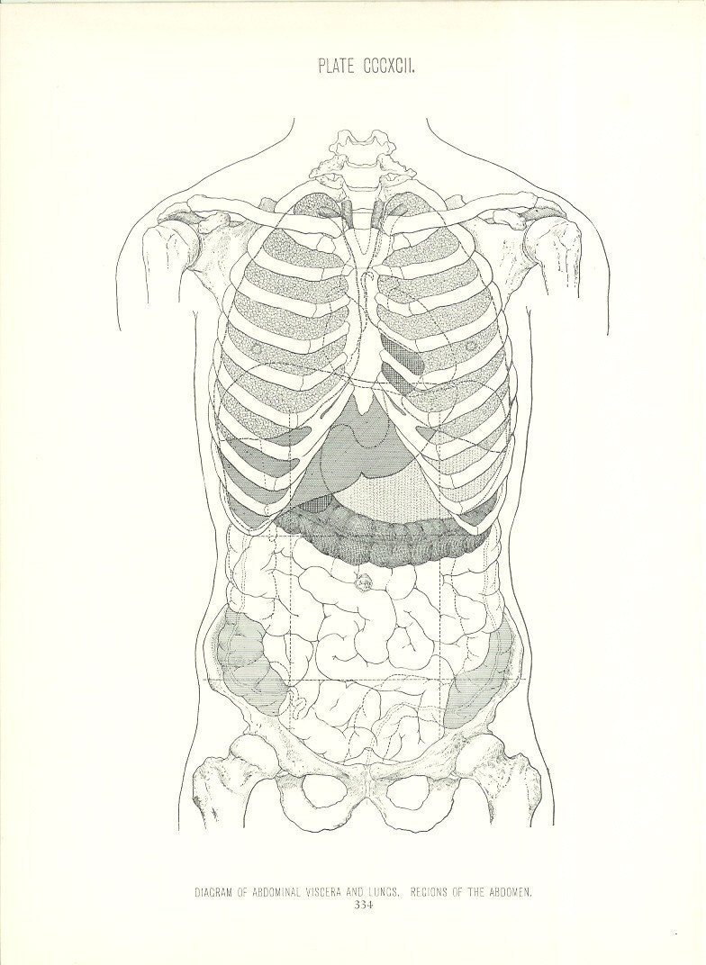 1926 human anatomy print abdomen diagram vintage antique