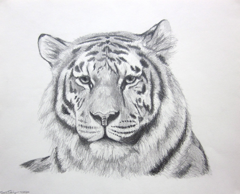 cat tiger art Panthera Tigris In Pencil original pencil