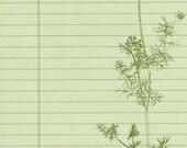 Digital journal page  Garden Dill