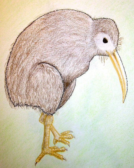 Poetic Art: Emily Dickinson's Kiwi - Emily Dickinson poem in pen and colored pencil (Original, One-of-a-Kind) by Carol Bloomgarden