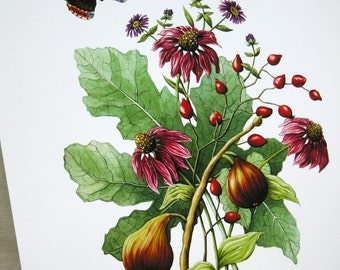 Fig and coneflower bouquet original illustration gardening art reproduction digital print botanical home decor