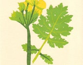Celandine Poppy, Pressed Flower, Linoleum Reduction Print