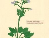 Cutleaf Toothwort, Pressed Flower, Linoleum Reduction Print
