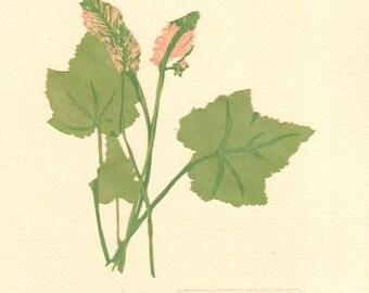 Foamflower, Pressed Flower, Linoleum Reduction Print