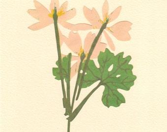 Bloodroot, Pressed Flower, Linoleum Reduction Print