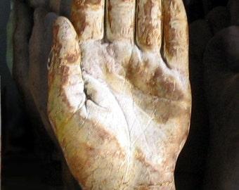 palmist's hand