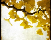 Golden Leaves - Fine Art Print - Nature Photography - For Tree Lovers - Etsy Wall Art - TFTeam