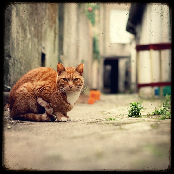 Alley Cat - Fine Art Print - Cat Photography - Etsy Wall Art - TFTeam